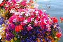 kesäkukkia/summer flowers