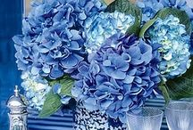 Inspiration in white&blue