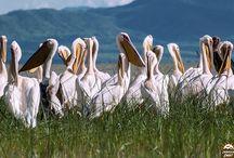 Southern Ethiopia/Nechisar National Park