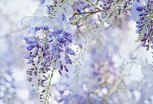 piante e fiori
