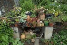 Mijn tuin  / Plants I have in my garden