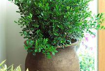 Pots, plants & flowers