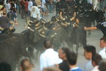 Les Taureaux / La passion pour les taureaux revêt parfois des aspects inattendus : des statues de taureaux ont été érigées aux entrées de ville de Beaucaire. Chaque année, tout au long de la Temporada (saison taurine de mars à octobre), ont lieu les principales manifestations taurines : Encierros, Abrivados et Courses Camarguaises