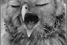 Owl corner