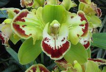 ORCHIDS - varieties I have in my garden