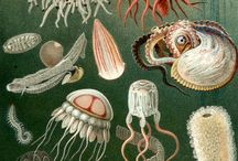 03 - Sea Life / Nautical Art / by Janine Shroff