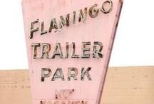 Hey Flamingos!