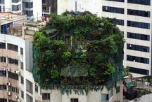 Pflanzenwelt