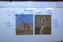 School - Inquiry tools