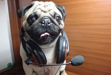 Rockin' Pugs / For all the musical pugs in the world.