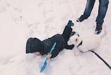 Instagram К кому-то под Новый год пришёл Дед Мороз, а к нам пришла Керри и живет теперь с нами :)  photo by @e_nota