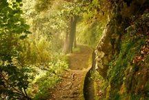 Secret Gardens