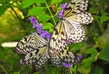 Butterflies / by Carmen Fuentes