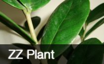 Houseplant Profiles / Houseplant Profiles and Articles