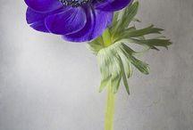 Синий, фиолетовый