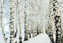 Winter wonderland / Mooie winterse foto's