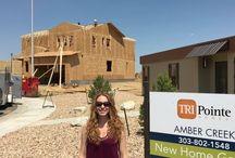 Amber Creek   Thornton by TRI Pointe Homes
