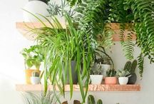 zielony pokój