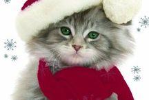 Karácsonyi cukiság