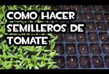 Semilleros / Desde como preparar tus propios semilleros hasta como reutilizar cientos de materiales para que sirvan como semilleros ecológicos para tus plantas.