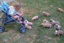 Puppies / Cute Pups