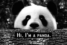 | PANDA♥♡ |