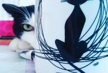 Pepe / My cat. Boy. Borned 8th april 2013.