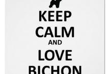 Love the Bichons