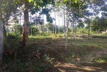 Land Property / Tanah Murah | Tanah Luas | Lokasi Strategis | Investasi Property
