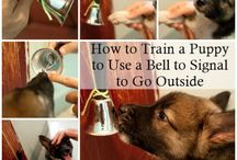 pets tips and tricks / by Heidi Appis