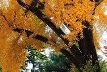 T o k y o / / C h i y o d a / 千代田区 / Tokyo Imperial Palace