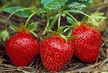 Fruits / Fruits picking