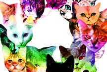 Meowww / by Sarah Haas