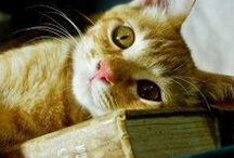 Books & Cats!! / Books and cats, what else?