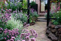 Kleine tuin / Ontwerp kleine tuin