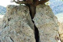 Curiosidades Natureza