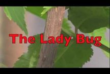 Lady bug / by Shanda Fitte @ My Intentional Play