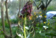 il mio giardino 1
