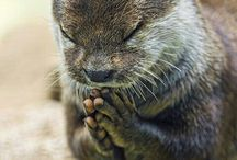All creatures great and small / Jehovah God made us so much variety...beautiful, cute, funny and amazing animals.