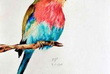 Kresba barevné