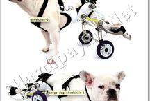 Köpekler için Tekerlekli Sandalye
