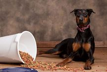 Dog Food Features / Interesting and useful articles surrounding the topic of dog food.