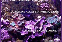 Singapore Reef Club / Singapore Marine aquarium Reefing community.