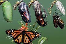 I just love butterflies….
