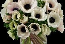flowers / by stephanie neely