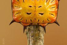 insetos - borboletas