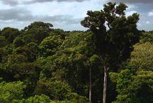 Amazônia S/A (Sociedade Anônima)