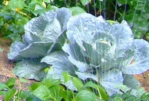 Gardening - Plant of the Week