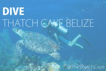 Under the Sea / Scuba Diving, Snorkeling, and Swimming in the Belize Barrier Reef at Thatch Caye Resort in Belize