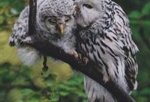 Animal parenting